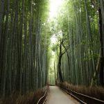 visite-bambouseraie